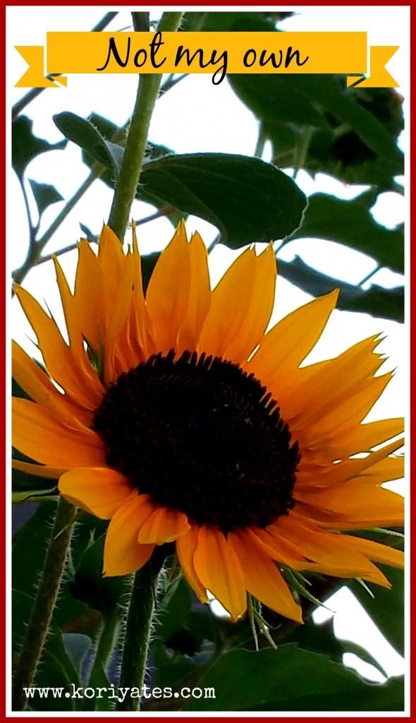 sunflower edited